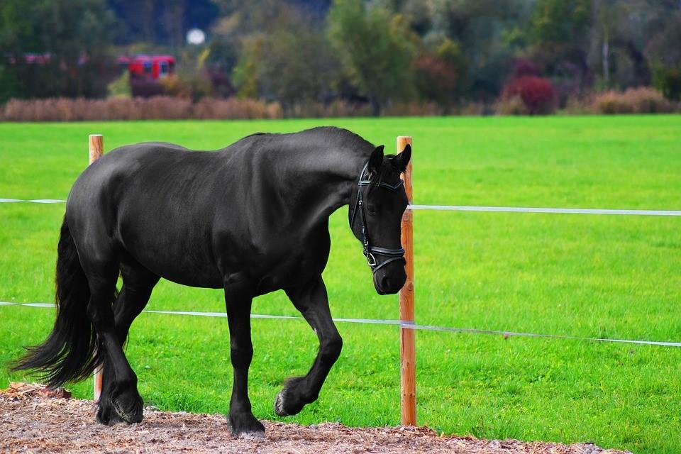 elektrolity jako pasza dla koni