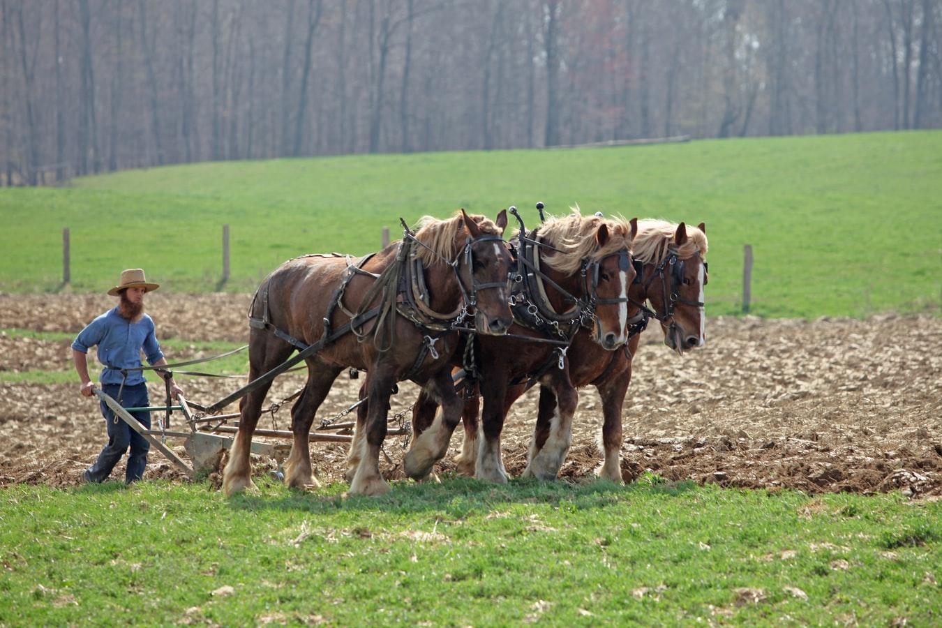 koń w dziejach