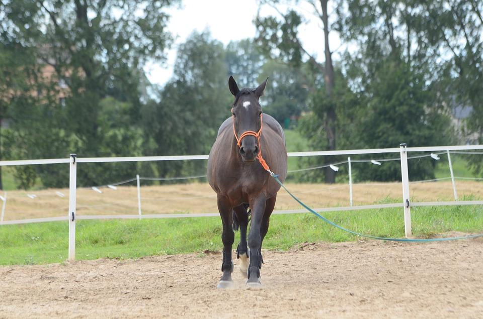 granulat dla konia