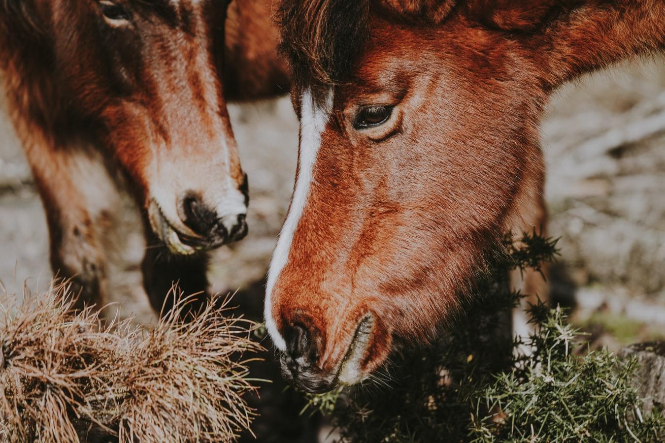 suplementy dla konia