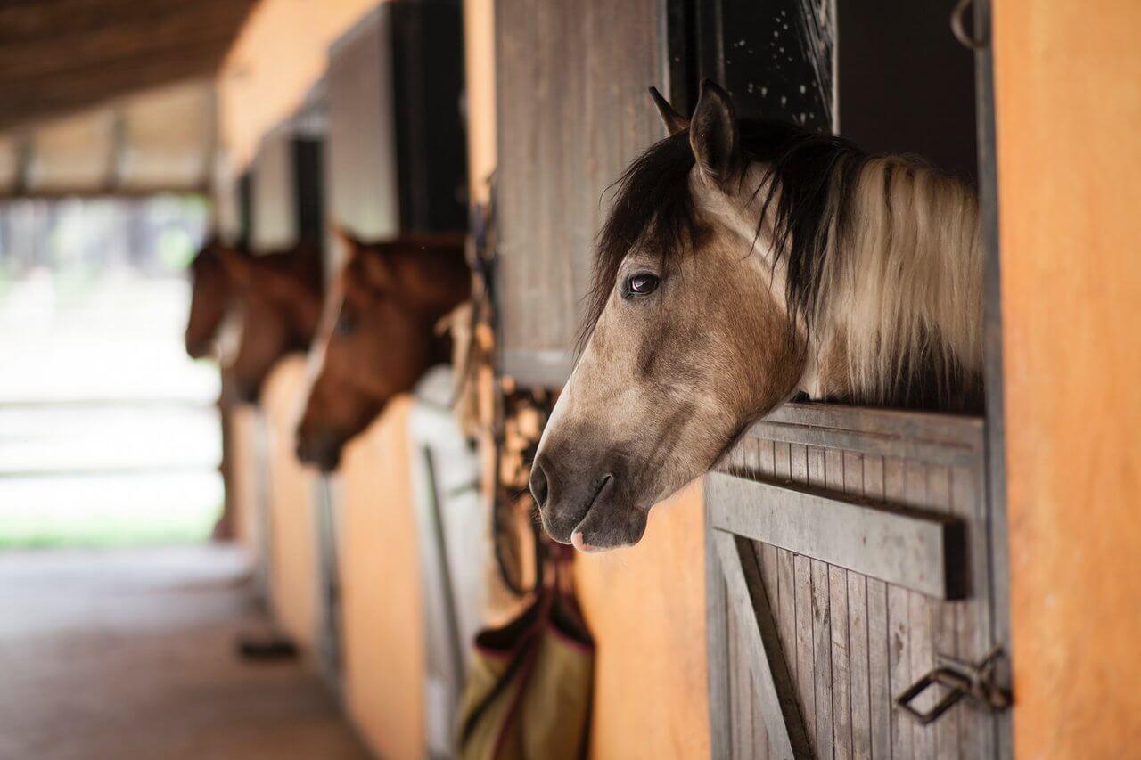 na czym polega dzierżawa konia