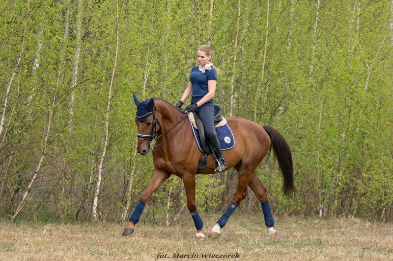 opoje u koni przyczyny