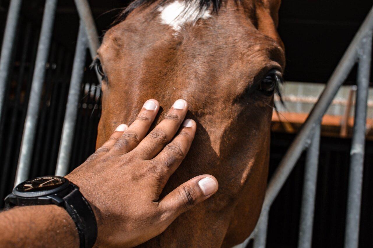 narowy u koni