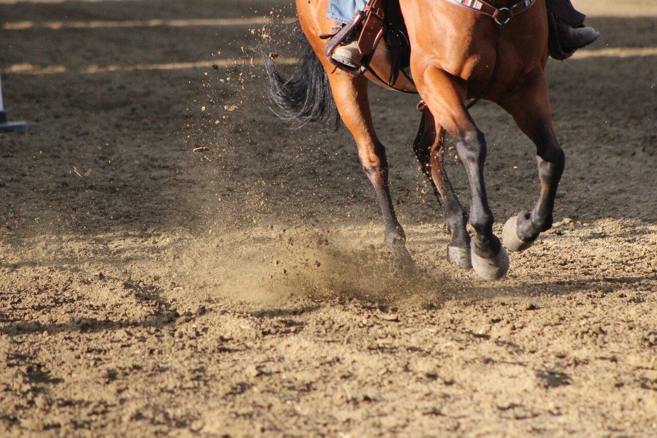 nawyki u koni