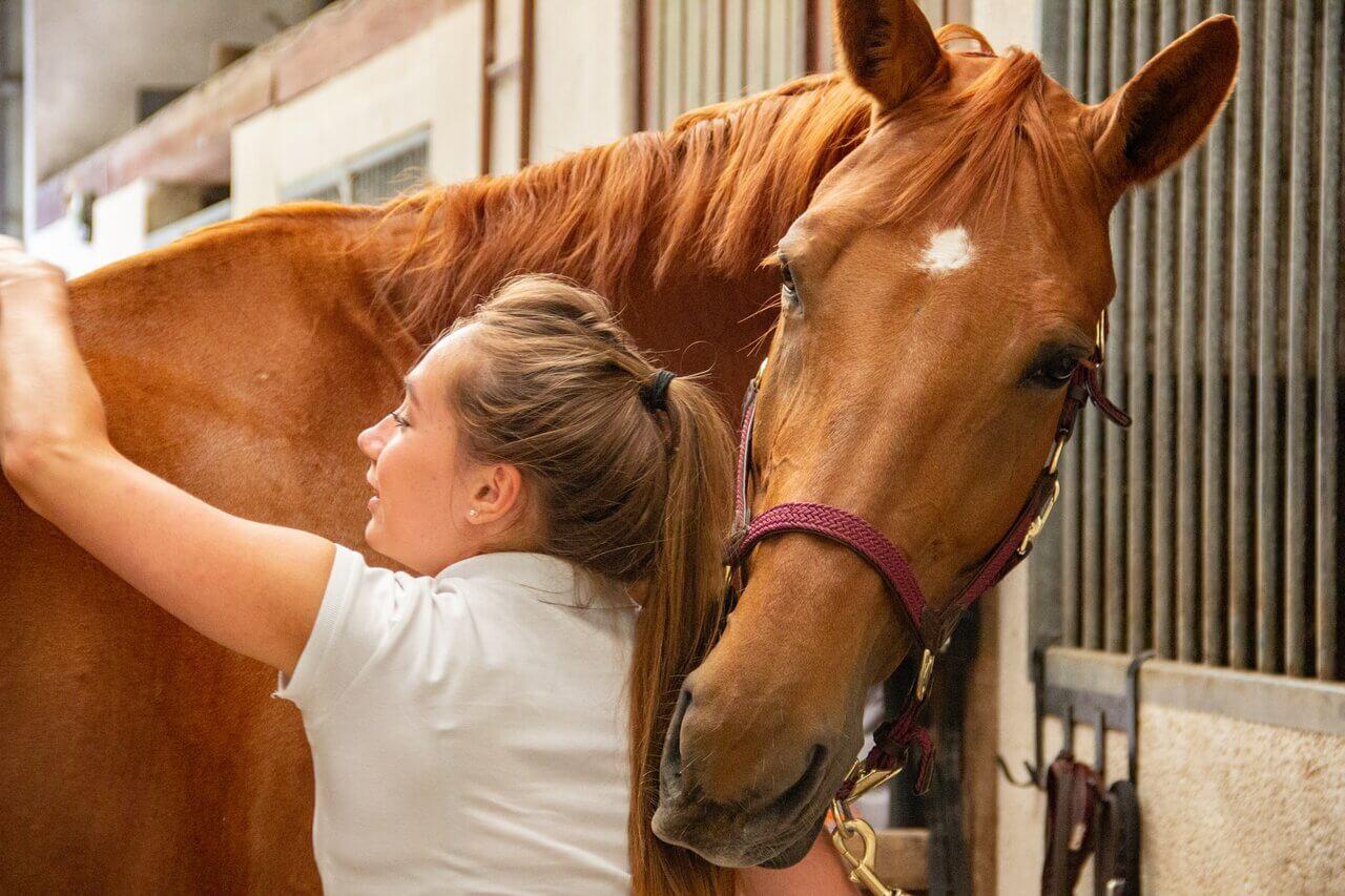 szczepienie koni