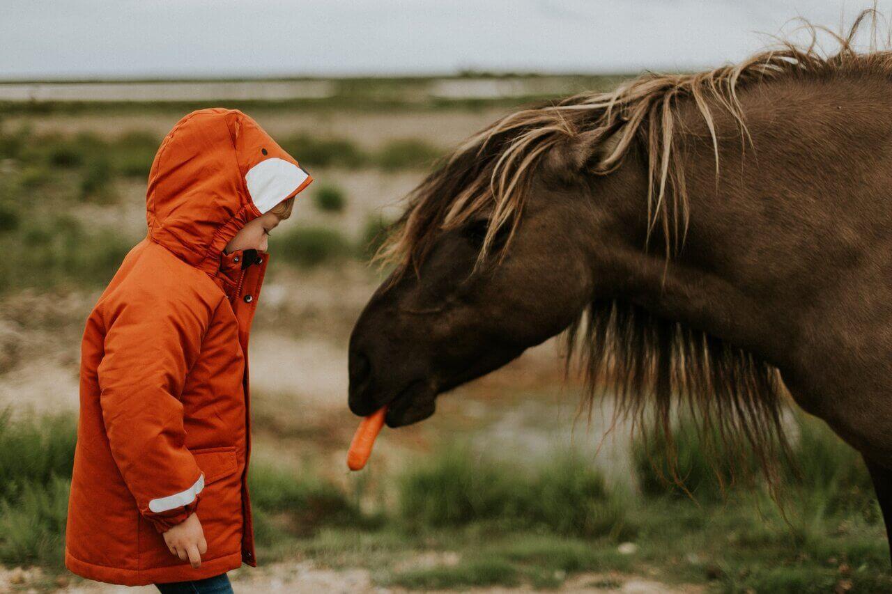 koń jedzący marchew