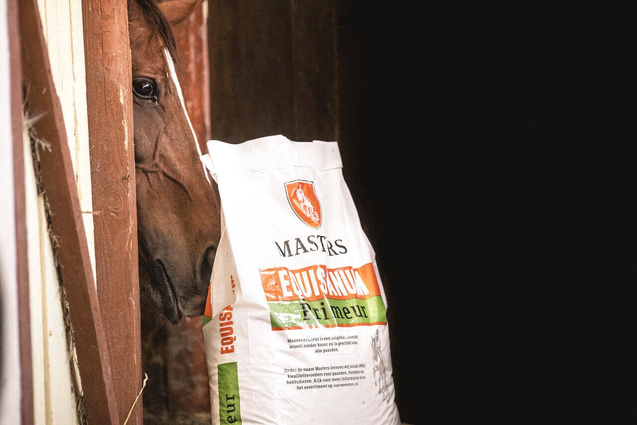 prawidłowe żywienie koni