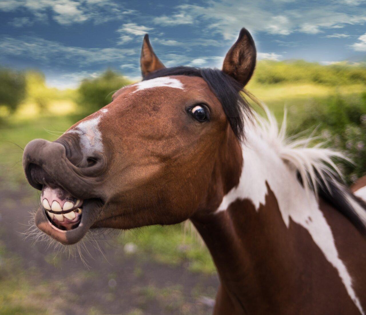 końskie zęby
